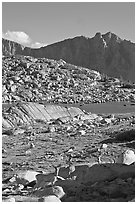 Deer in alpine terrain, Dusy Basin, afternoon. Kings Canyon National Park, California, USA. (black and white)