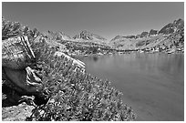 Wood stump and lake, Lower Dusy Basin. Kings Canyon National Park ( black and white)