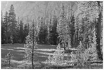 Big Pete Meadow, late afternoon, Le Conte Canyon. Kings Canyon National Park ( black and white)