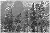 Pine trees and granite peaks. Kings Canyon National Park ( black and white)