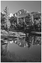 Trees and mountains reflected in calm creek, Lower Dusy basin. Kings Canyon National Park ( black and white)