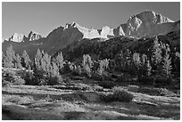 Meadow, trees and mountains, late afternoon, Lower Dusy basin. Kings Canyon National Park ( black and white)