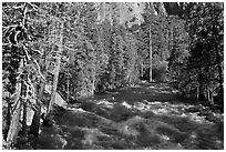 Roaring River in the spring. Kings Canyon National Park ( black and white)