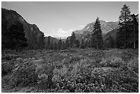 Meadow and cliffs at sunset, Cedar Grove. Kings Canyon National Park ( black and white)
