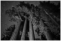 Giant sequoia grove and starry sky. Kings Canyon National Park ( black and white)