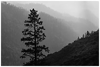 Silhouetted tree and canyon ridges. Kings Canyon National Park ( black and white)