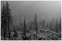Forest and valley slopes. Kings Canyon National Park ( black and white)