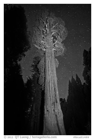 General Grant tree and night sky. Kings Canyon National Park, California, USA.