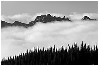 Dark conifers and ridge emerging from clouds. Mount Rainier National Park, Washington, USA. (black and white)