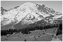 Sunrise area trails. Mount Rainier National Park, Washington, USA. (black and white)