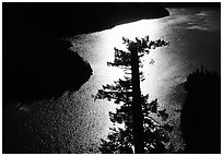 Backlit Tree and Diablo lake, North Cascades National Park Service Complex.  ( black and white)