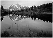 Fireweed flowers, lake with mountain reflections, Mt Shuksan, sunset, North Cascades National Park. Washington, USA. (black and white)