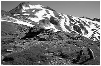 Marmots and Sahale Peak, morning, North Cascades National Park.  ( black and white)