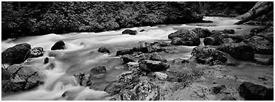 Stream in forest with colored mud. North Cascades National Park (Panoramic black and white)