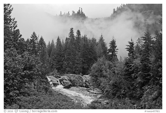 Stream, trees, and fog, North Cascades National Park.  (black and white)