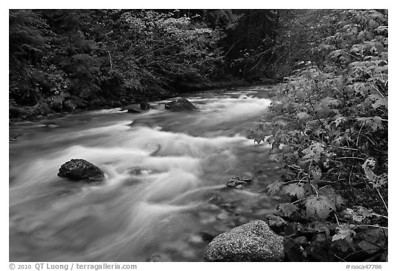 North Fork of the Cascade River in autumn, North Cascades National Park.  (black and white)