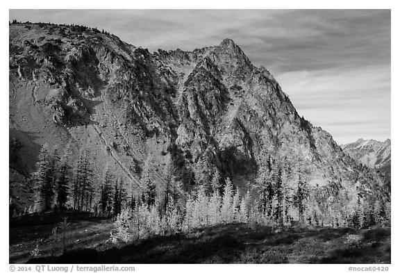 Alpine larch in autumn and rocky peak above Easy Pass, North Cascades National Park.  (black and white)
