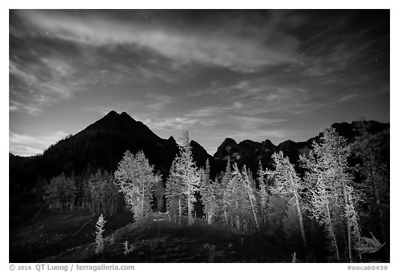 Larch trees and mountains from Easy Pass at night, North Cascades National Park.  (black and white)