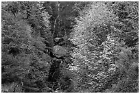 Waterfall in gully bordered by trees in fall foliage, North Cascades National Park Service Complex.  ( black and white)