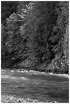 Stream in autumn, Gorge Lake, North Cascades National Park Service Complex.  ( black and white)