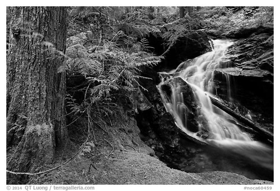 Creek in forest, North Cascades National Park Service Complex.  (black and white)