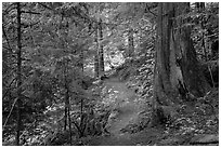Thunder Creek trail, North Cascades National Park Service Complex.  ( black and white)