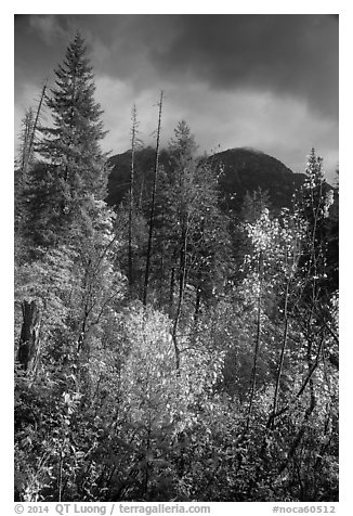 McGregor Mountain under dark sky in autumn, North Cascades National Park.  (black and white)