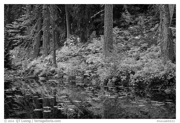 Shore reflection, Coon Lake, North Cascades National Park Service Complex.  (black and white)
