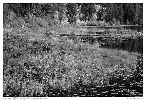 Lakeshore in autumn, Coon Lake, North Cascades National Park Service Complex.  (black and white)