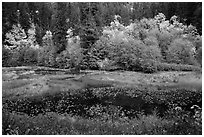 Pond in autumn, North Cascades National Park Service Complex.  ( black and white)