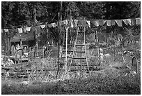 Vegetable garden, Stehekin, North Cascades National Park Service Complex.  ( black and white)