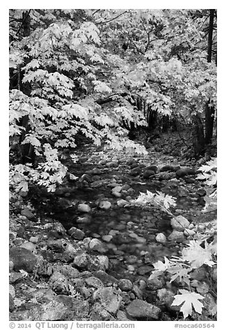 Stream and trees in autum foliage, Stehekin, North Cascades National Park Service Complex.  (black and white)