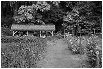 The garden, Stehekin, North Cascades National Park Service Complex.  ( black and white)