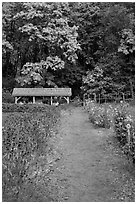 Organic garden, Stehekin, North Cascades National Park Service Complex.  ( black and white)