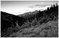 Wildflowers at sunset, Hurricane ridge. Olympic National Park ( black and white)