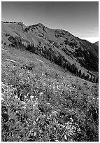 Wildflowers on grassy slope, Hurricane ridge. Olympic National Park ( black and white)