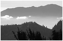 Wind-twisted trees and mountain ridges from Hurricane hill. Olympic National Park ( black and white)