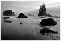 Beach with seastacks and reflections. Olympic National Park ( black and white)