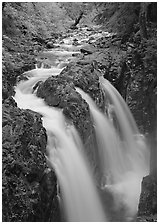 Sol Duc river and falls. Olympic National Park, Washington, USA. (black and white)