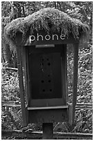Phone booth covered by moss. Olympic National Park ( black and white)
