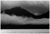 Fog hanging over shores of Lake Quinault. Olympic National Park ( black and white)