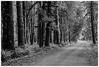 Unpaved road, Lake Quinault North Shore. Olympic National Park ( black and white)