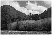 Meadow, trees, and hills in late autumn, Lake Quinault North Shore. Olympic National Park ( black and white)