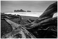 Driftwood and sea stacks in stormy weather, Rialto Beach. Olympic National Park ( black and white)