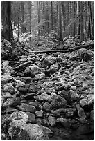 Stream, mossy boulders, and old growth forest, Sol Duc. Olympic National Park ( black and white)