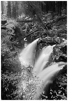 Sol Duc Falls and bridge in autumn. Olympic National Park ( black and white)