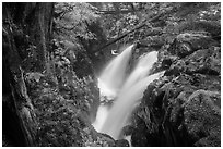 Soleduc Falls, gorge, and footbridge in autumn. Olympic National Park ( black and white)