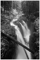 Soleduc Falls dropping into narrow gorge in autumn. Olympic National Park ( black and white)