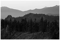 Forested ridge, Hurricane Hill. Olympic National Park ( black and white)
