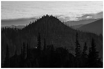 Forest ridges, sea of clouds, and mountain goat. Olympic National Park ( black and white)